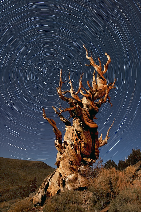 This is an image that I've been meaning to take for the past three years. Back in 2009 I was suppose to go to the Bristle Cone Pine forest in California's Eastern Sierra Range but at the last minute I had to back out of the trip.  So the past couple of years I just never managed to squeeze this location into my travels...then, in the winter of 2011 on my way home from shooting in the desert southwest I learned that Tioga Pass was open unusually late in the season. Bells went off...if Tioga Pass is open then maybe the Bristle Cone Pines are too, and sure enough!  So, I bring you an hour long star trail exposure with a 4700 year old Bristone Cone Pine tree as the subject. This was taken about 9pm at night under a half moon, at 20 degrees. Yes, it gets awfully cold standing out there waiting for the exposures to finish!