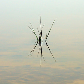Shot this image on the East End of Galveston Island. Was a very foggy morning and the water surface was completely still. This bit of grass caught my eye and I thought it would make a great minimalistic image. Sort of a Zen feel to it.