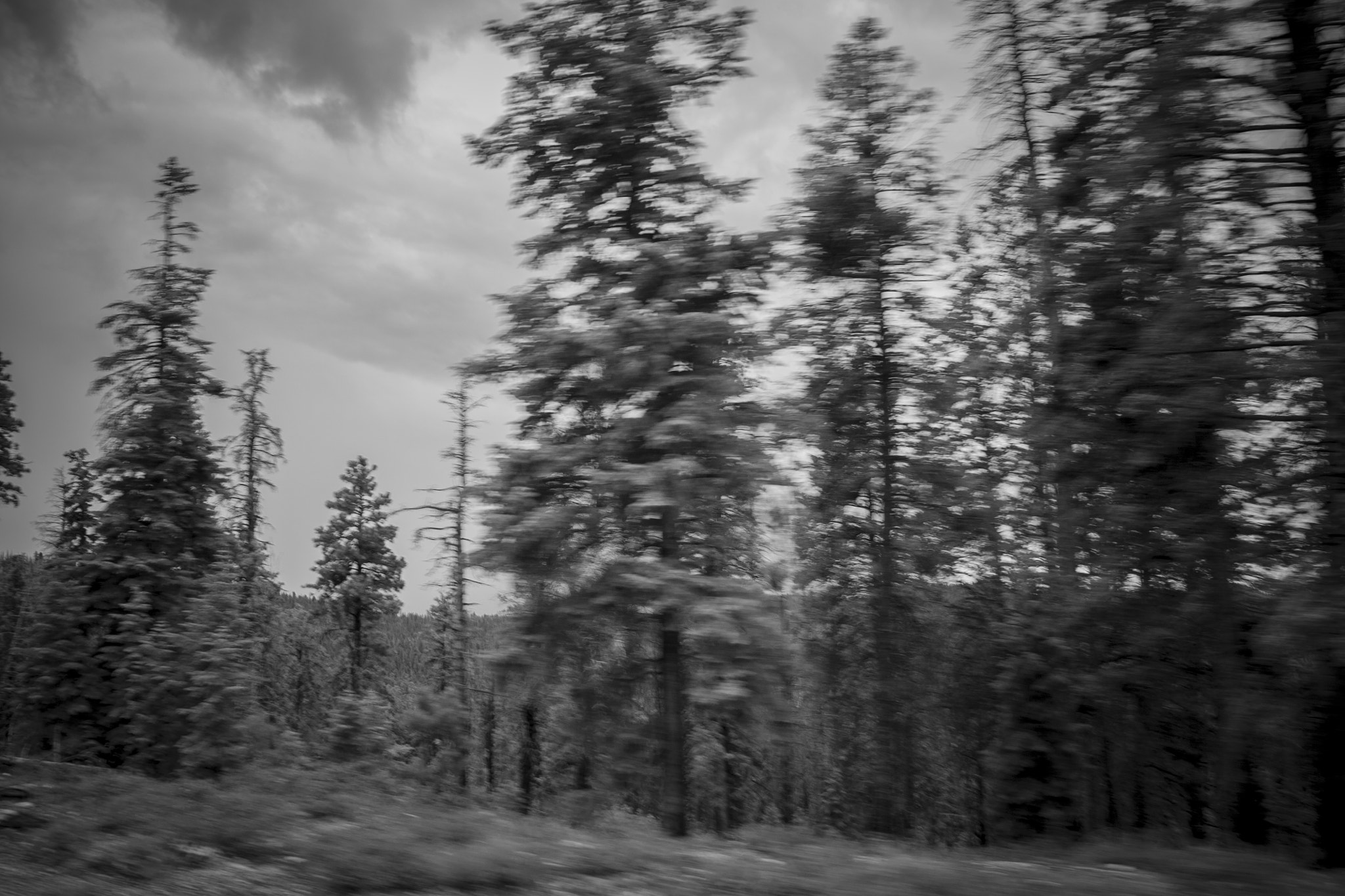 Photograph Bryce in Motion by Shane Moss on 500px