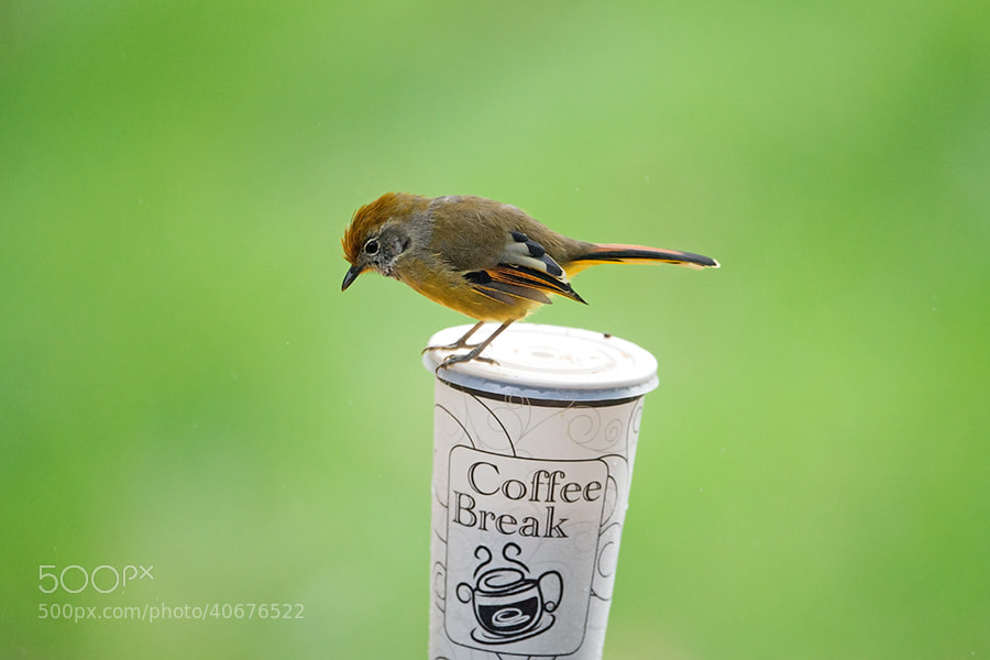 Photograph  Coffee Time by Surachai Chartsuwan on 500px