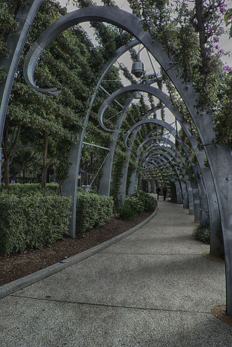 Photograph Vine covered walkway by Trevor Gensch on 500px