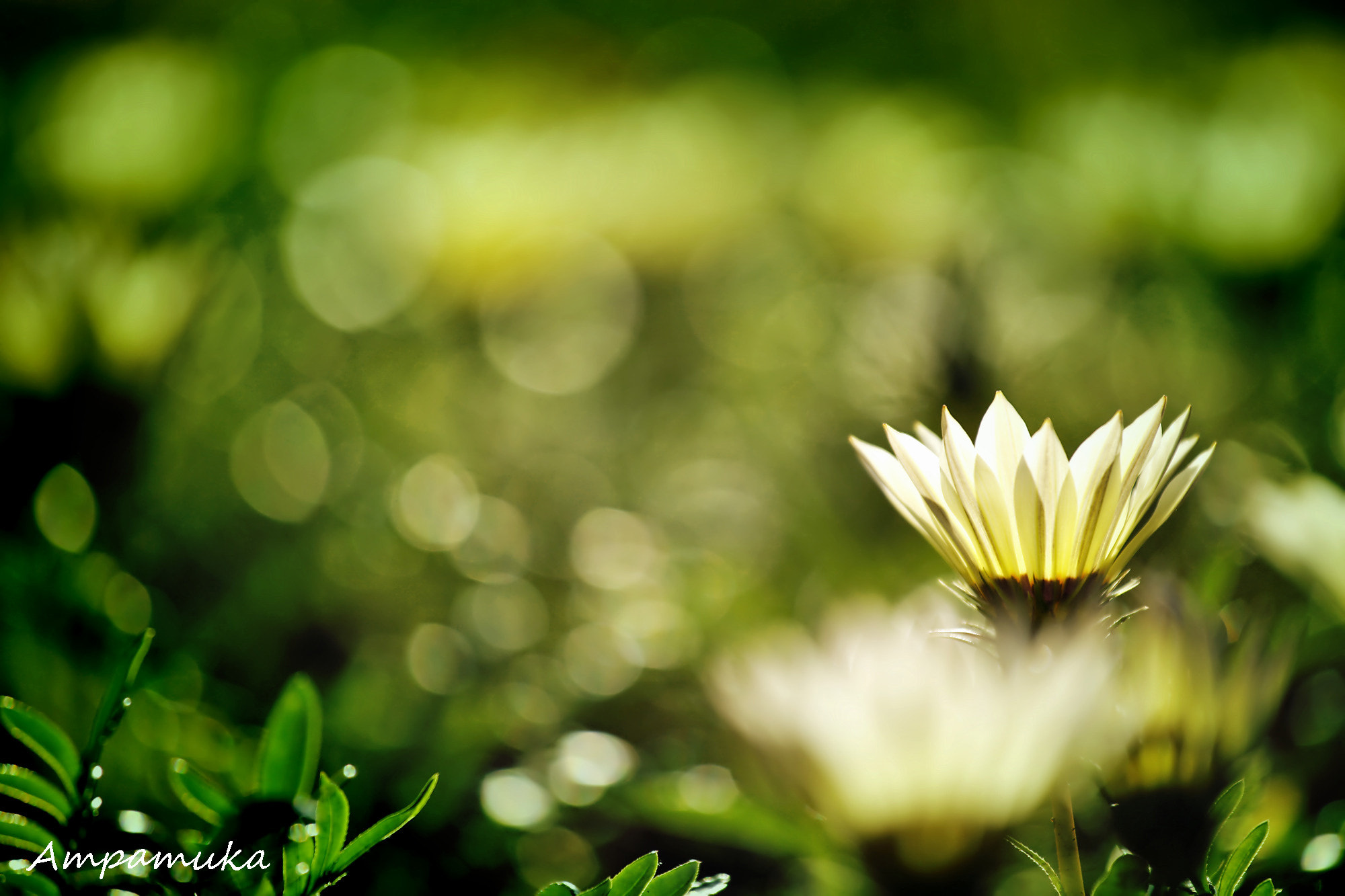 Photograph Shining Bloom by Suradej Chuephanich on 500px
