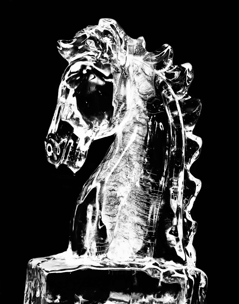 Photograph Ice Horse by Benjamin Wilson on 500px