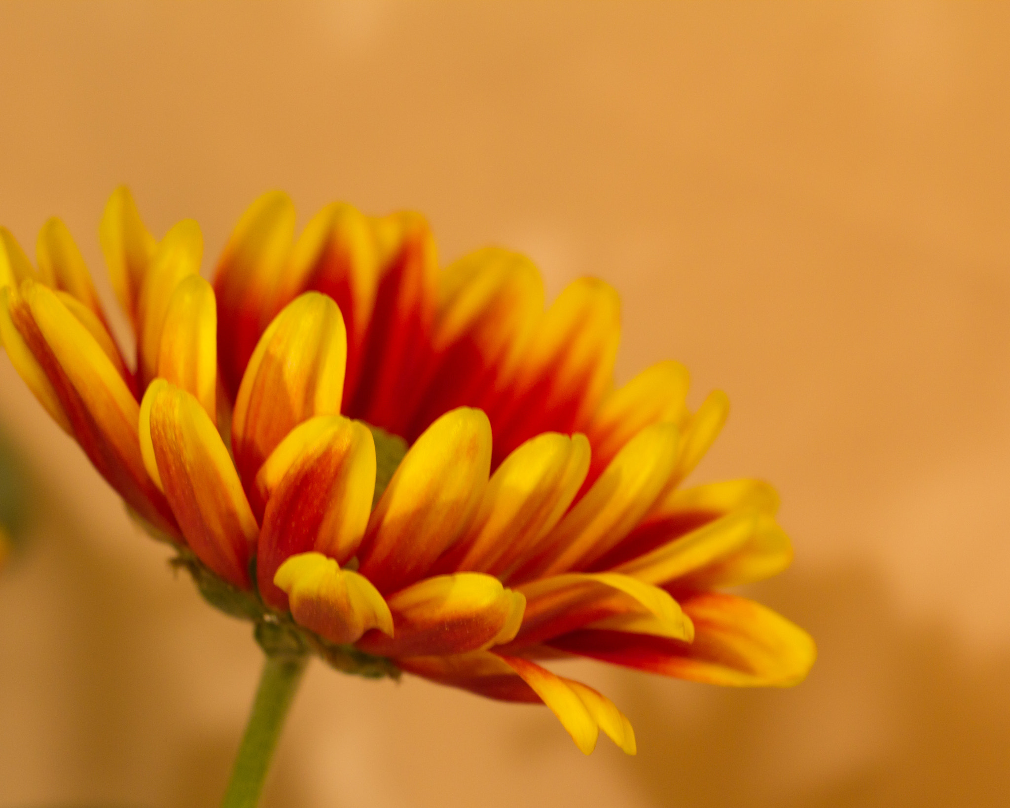 Photograph Flora 4 by Carl Unruh on 500px