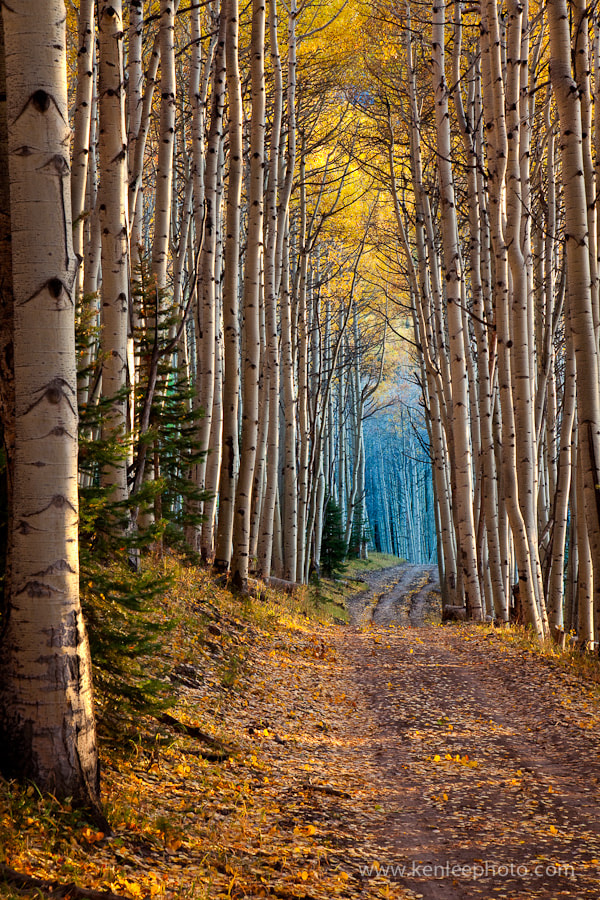 Photograph Aspen Cathedral by Ken Lee on 500px