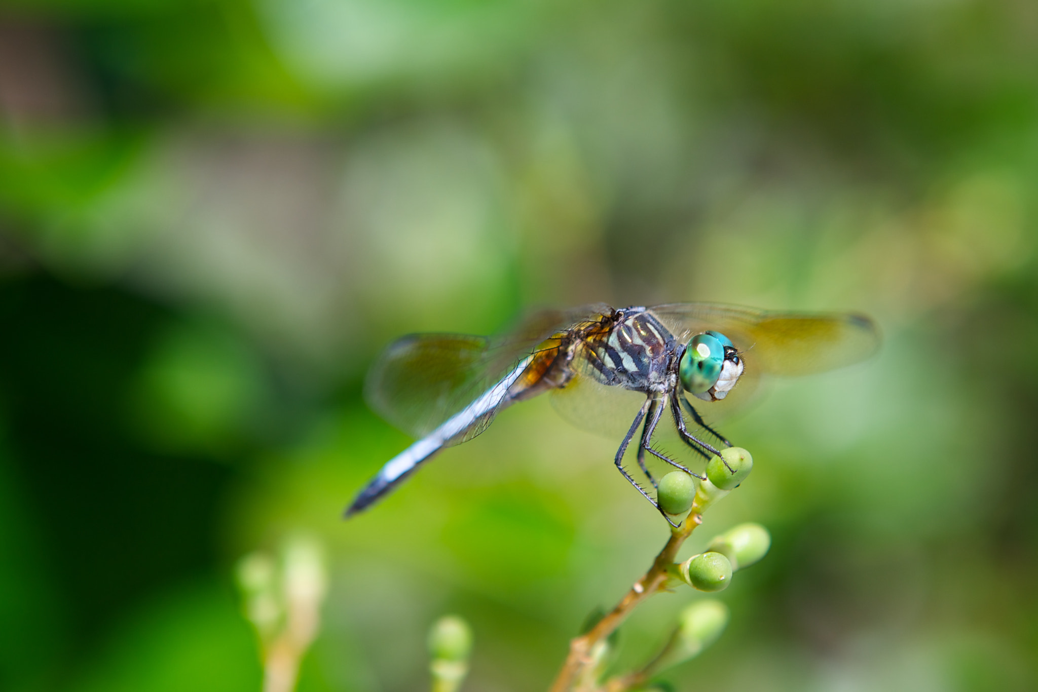Photograph Dragonfly by Angel Jimenez de Luis on 500px