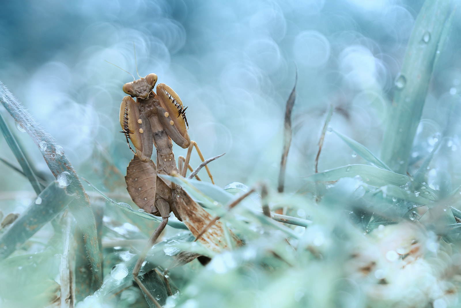 Photograph The Boxer Mantid by Donald Jusa on 500px