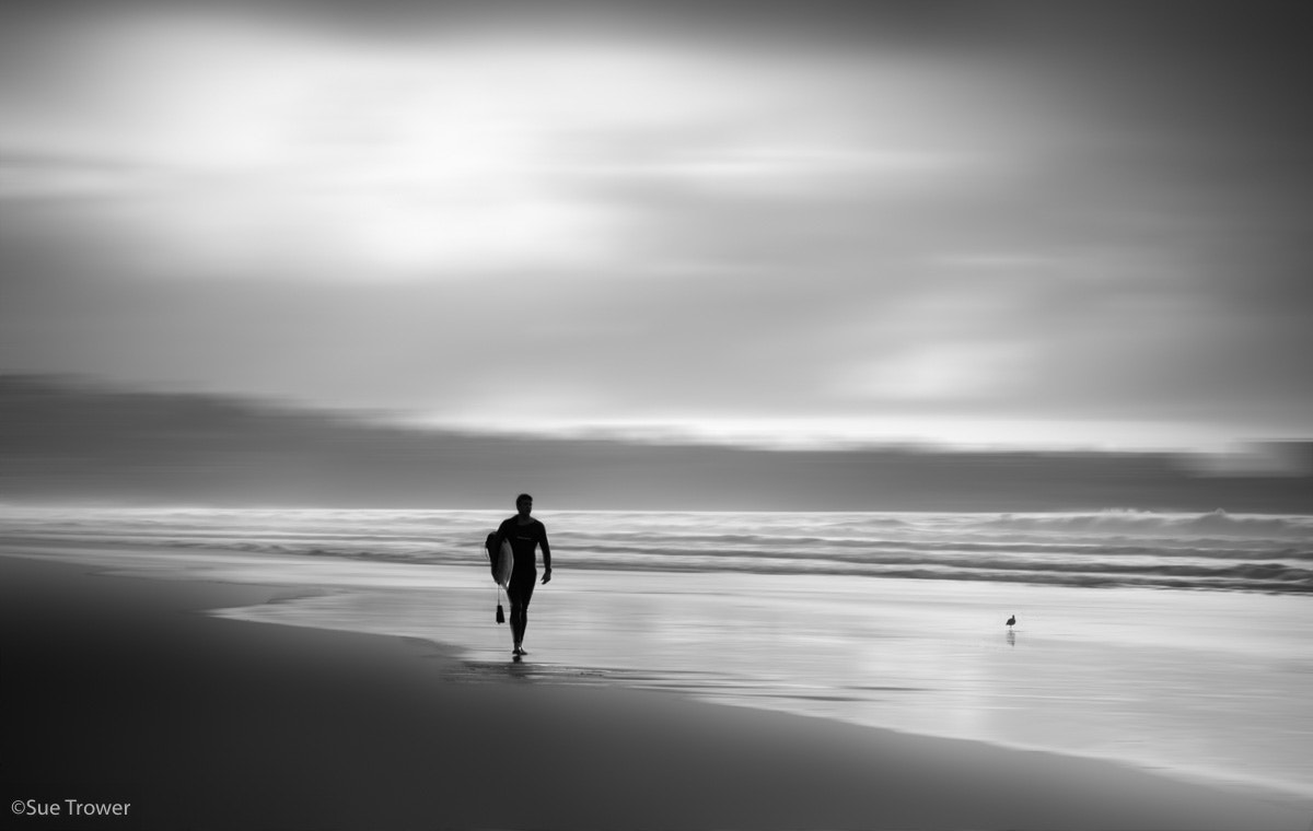 Photograph The Surfer and the Seagull by sue trower on 500px
