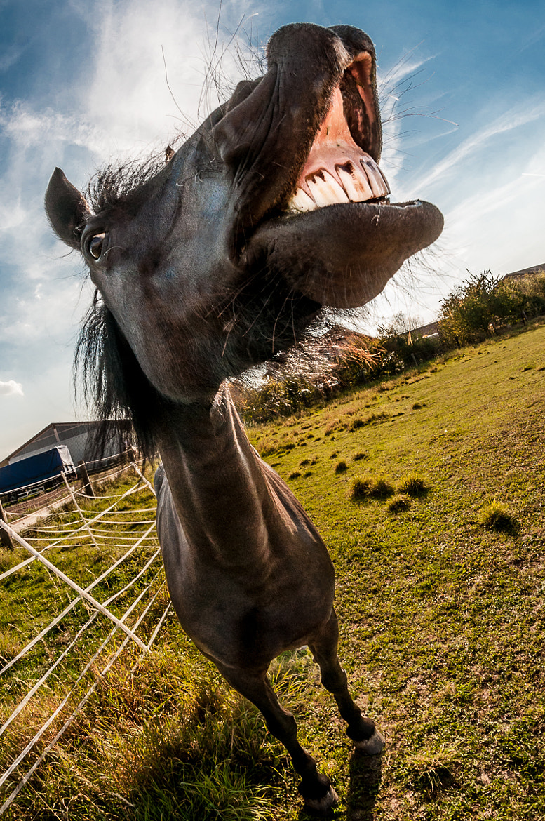 Photograph Smiling Horse by martin loos on 500px