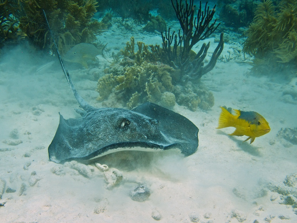 Photograph Stingray by Rene Knaake on 500px