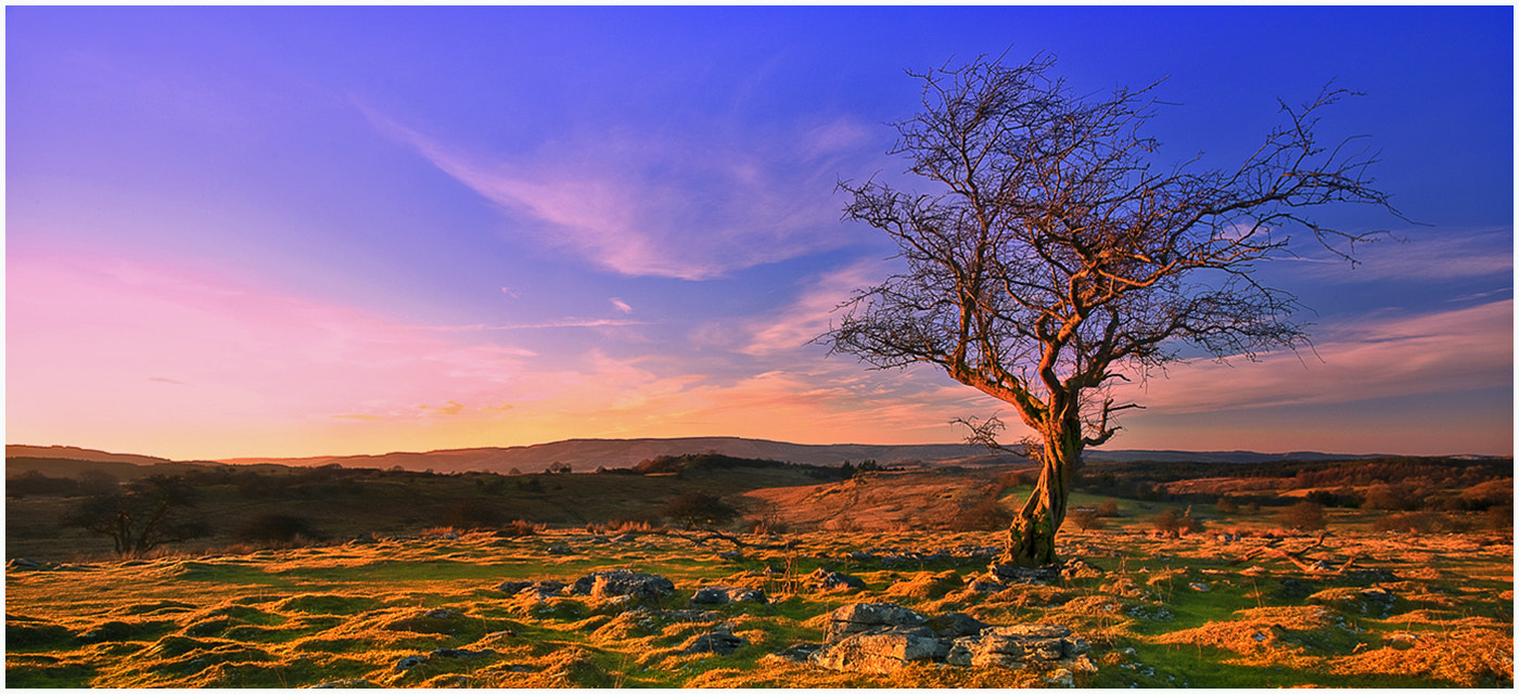Photograph Gnarled by Alan Coles on 500px