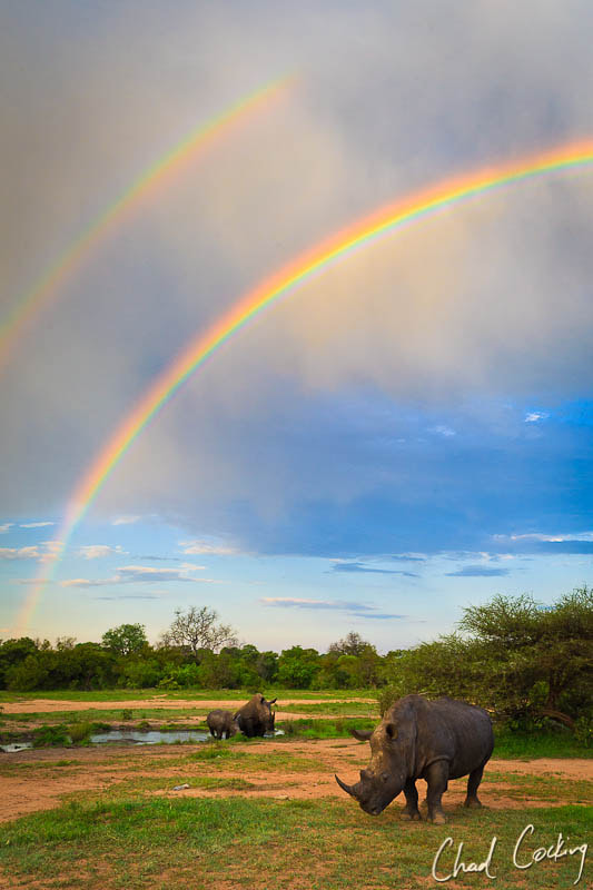 Photograph Rainbows and Rhinos by Chad Cocking on 500px