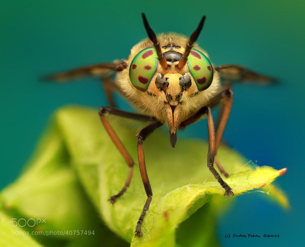 Photograph Green devil by Ondrej Pakan on 500px