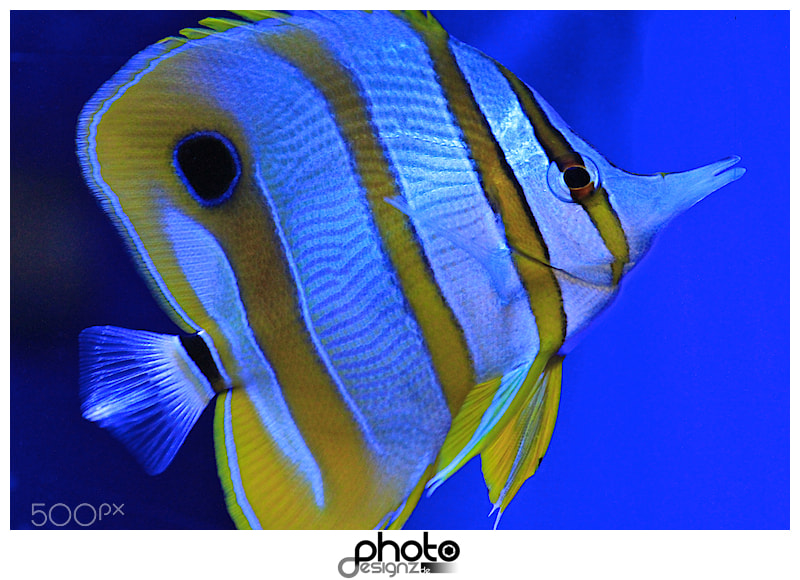 Photograph Fish by photodesignz B.Priess on 500px