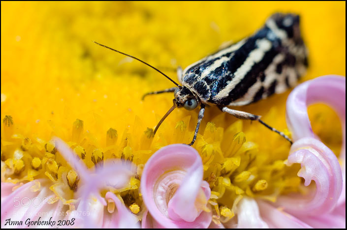Photograph butterfly by Anna Gorbenko on 500px