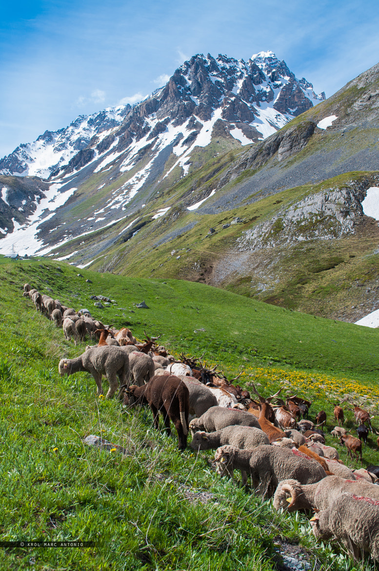 Photograph The path to Alpine pasture by Krol  Marc Antonio on 500px
