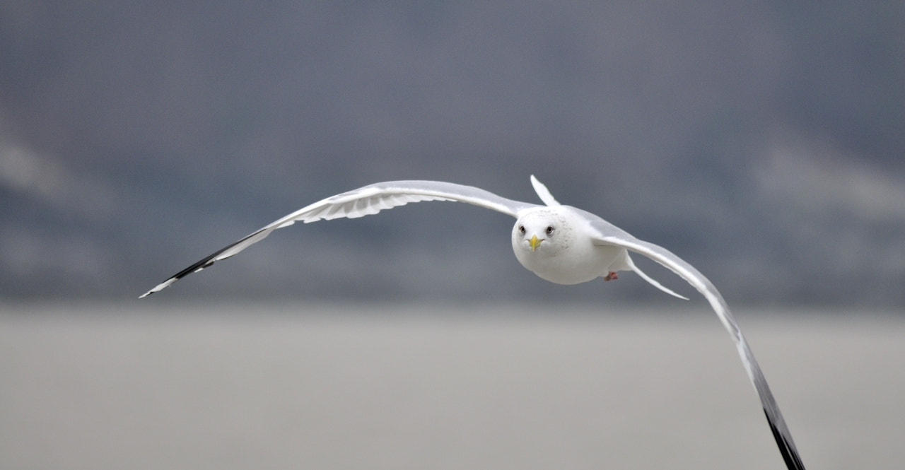Photograph fly by HoHyun Lee on 500px