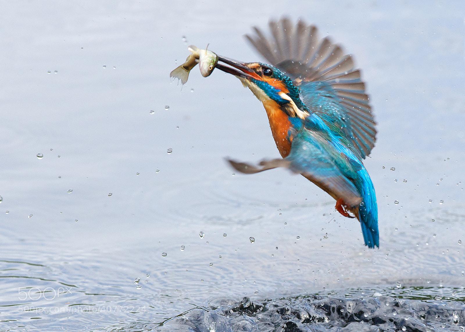 Photograph bye bye little fish.. by Mark Bridger on 500px