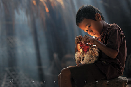 chicken story by dewan irawan