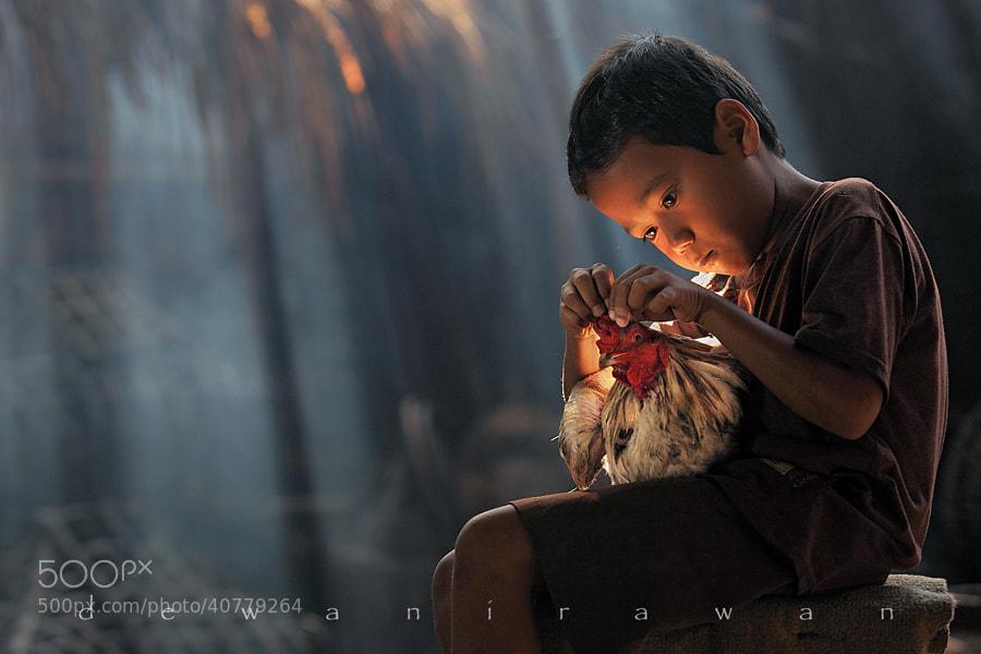Photograph chicken story by dewan irawan on 500px