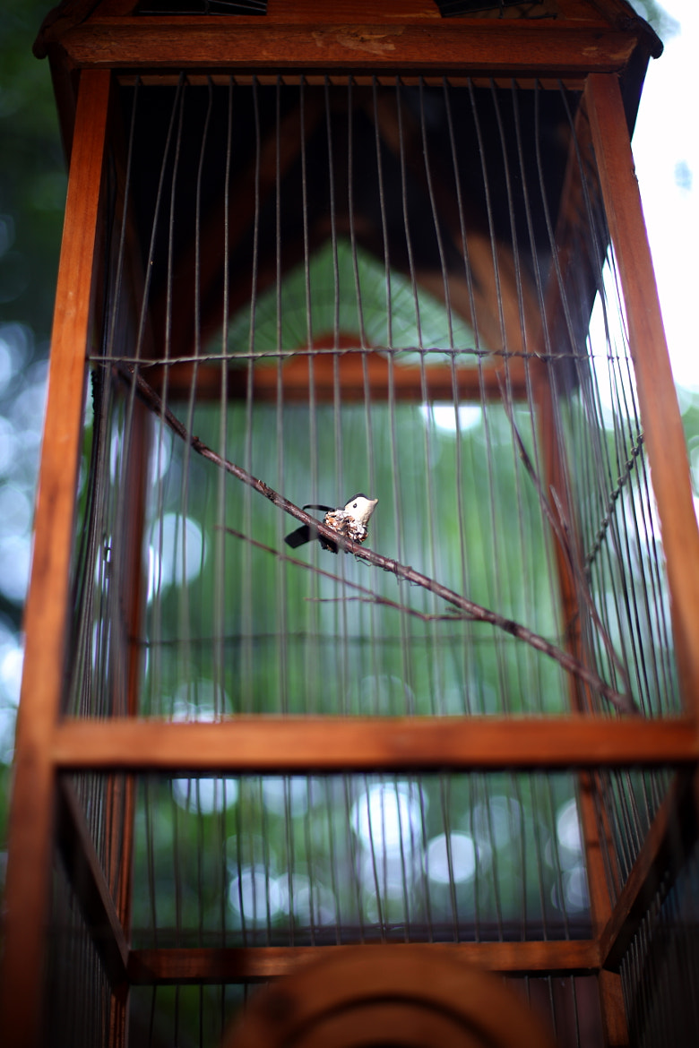 Photograph Jailbird by Dave Cohen on 500px