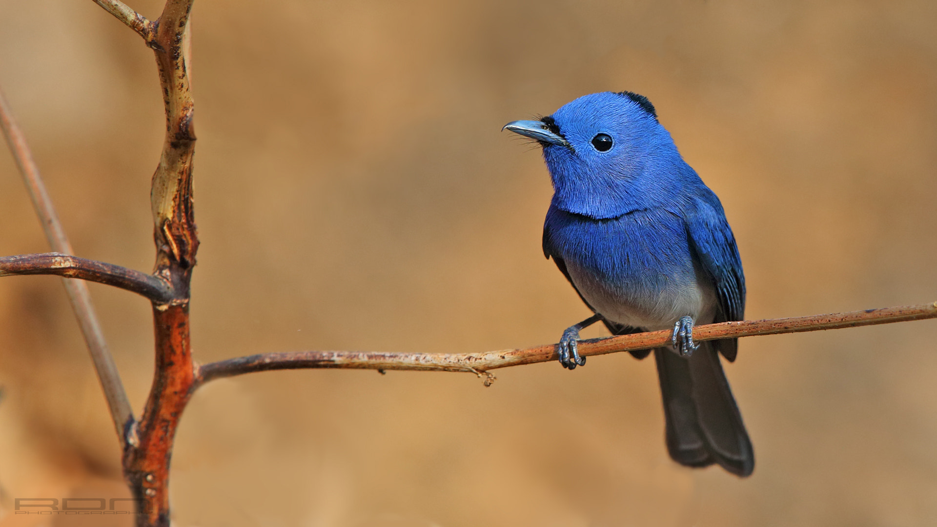 Photograph Detailed Blue by Ritesh Nangare on 500px