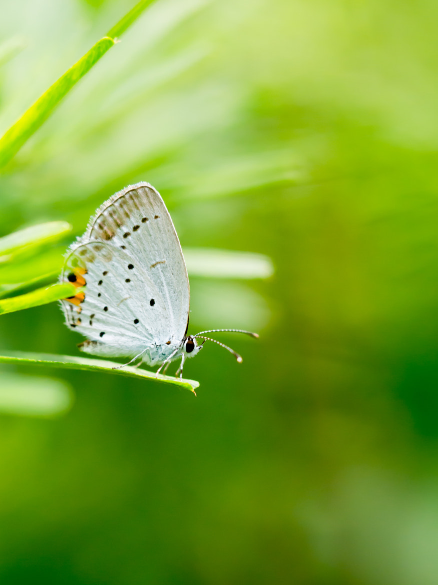 Photograph Butterfly by Yos Kawapon on 500px