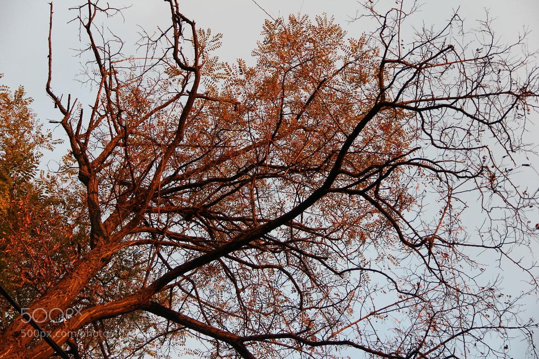 Photograph Untitled by Ferhat Hacibektasoglu on 500px