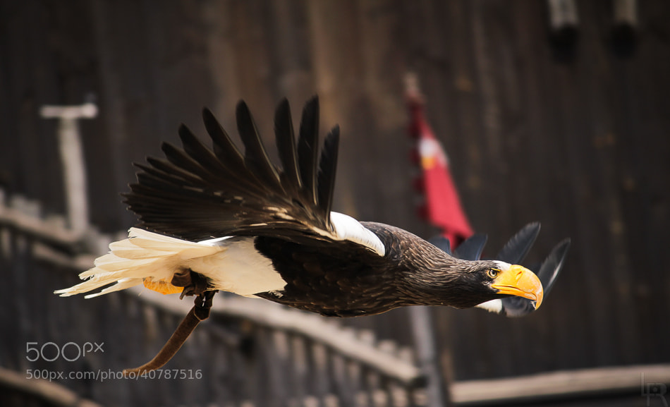 Photograph Landing in progress by Emilie Filrouge on 500px
