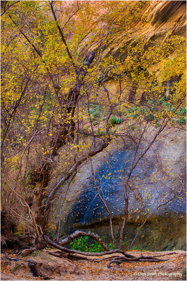 Photograph Birch Against Red Rock by Don Smith on 500px