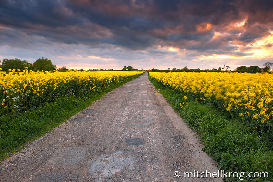 Photograph Fields of Gold | United Kingdom by Mitchell Krog on 500px
