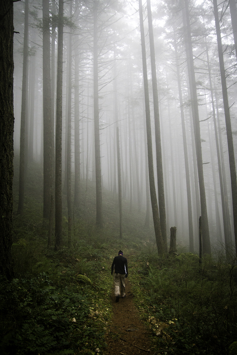 Photograph The Forest by Alec J on 500px