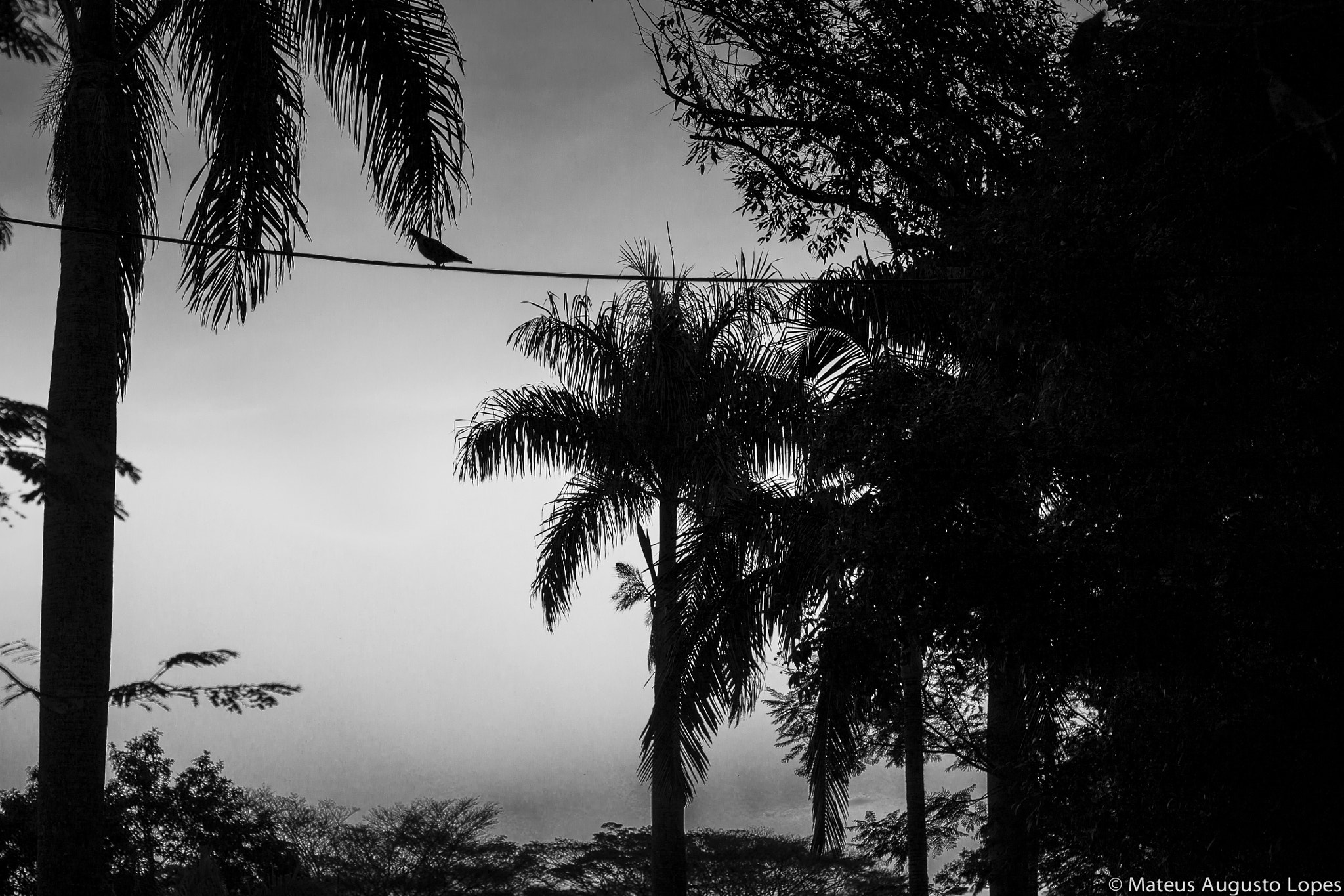 Photograph Black and White Sky by Mateus Lopes on 500px