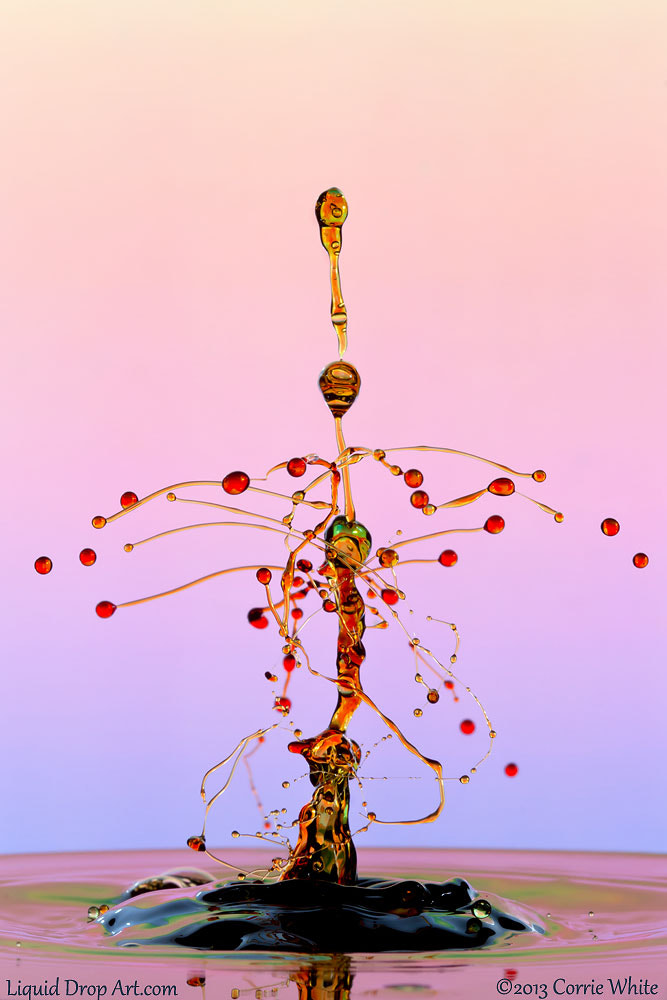Photograph Droplet Tree by Corrie White on 500px