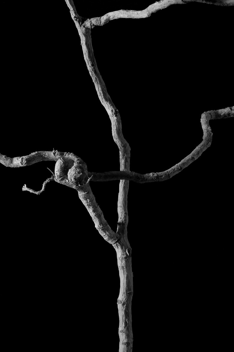 Photograph Root Cross by Vivek Ratnam on 500px