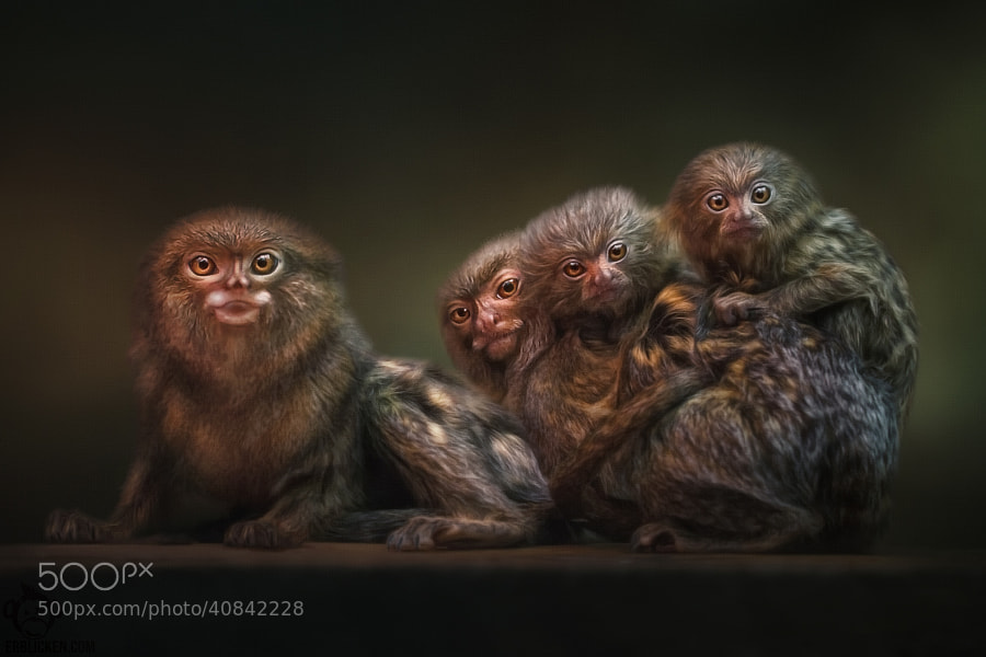 Photograph Family photo by Manuela Kulpa on 500px