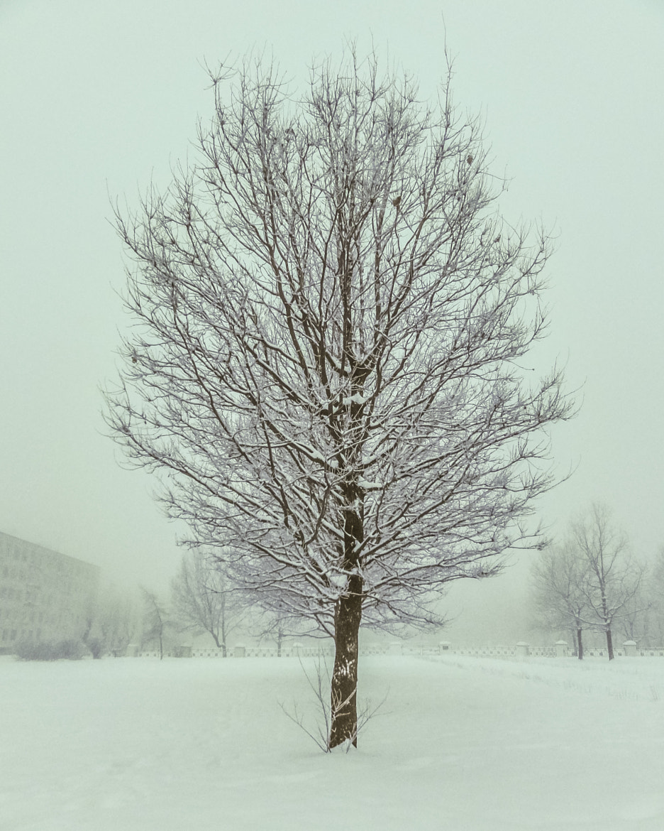 Photograph Tree by Andrey Opletaev on 500px