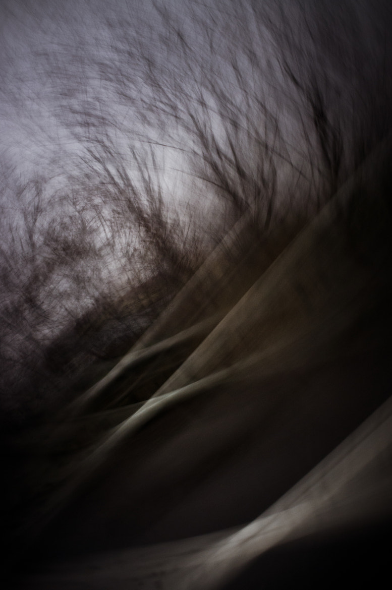 Photograph Spirits & trees by Emanuele  Toscano on 500px