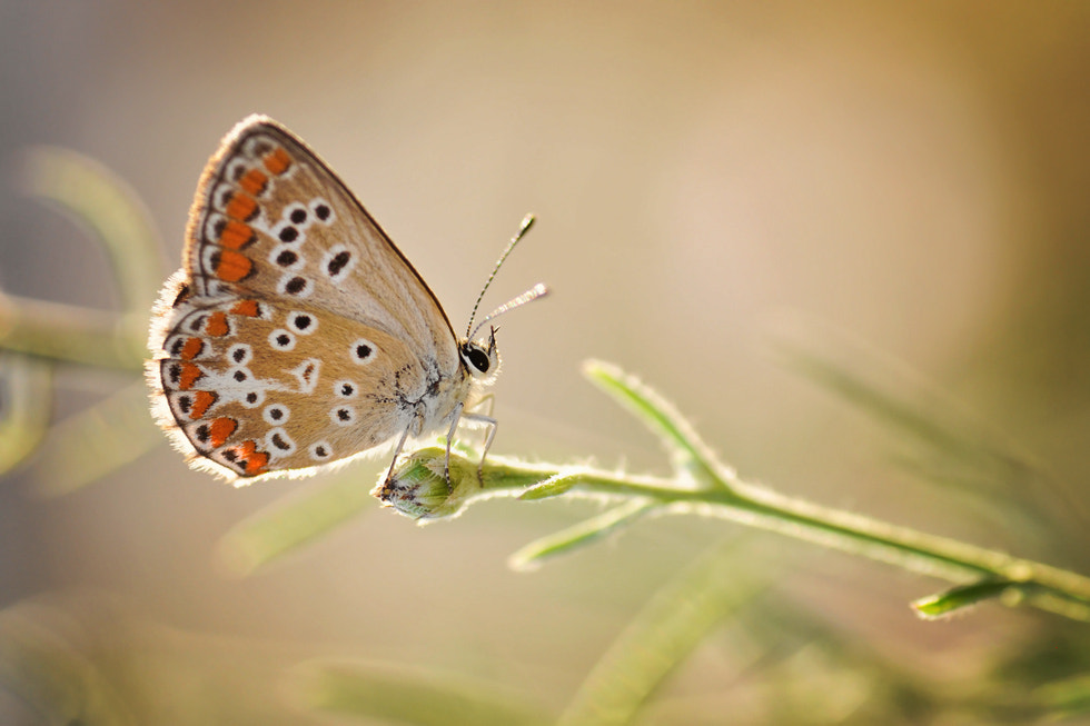 Photograph Butterfly by Mirka Wolfova on 500px