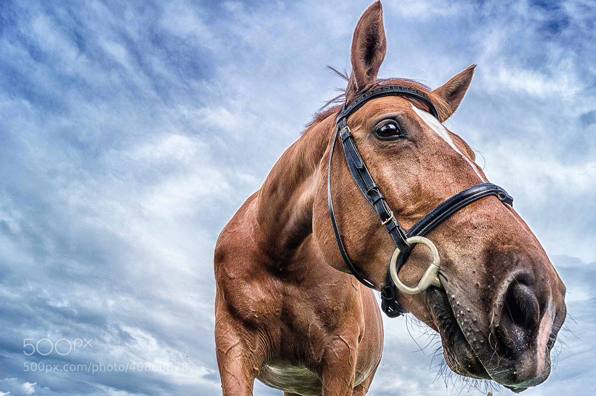 Photograph a Horse is a Horse is a Horse! by Frank Klix on 500px