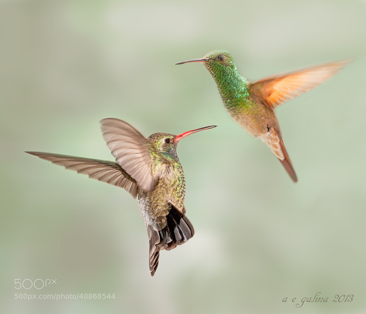 Photograph PELEA by Alfonso Emmanuel Galina on 500px