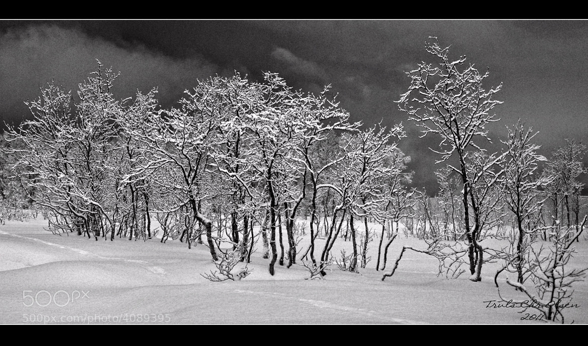 Photograph  Winter by Truls Christian Olsen on 500px