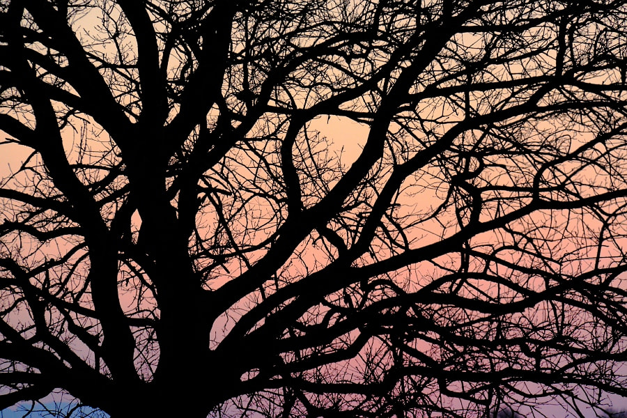 Photograph Sunset tree by Kim Fengari on 500px