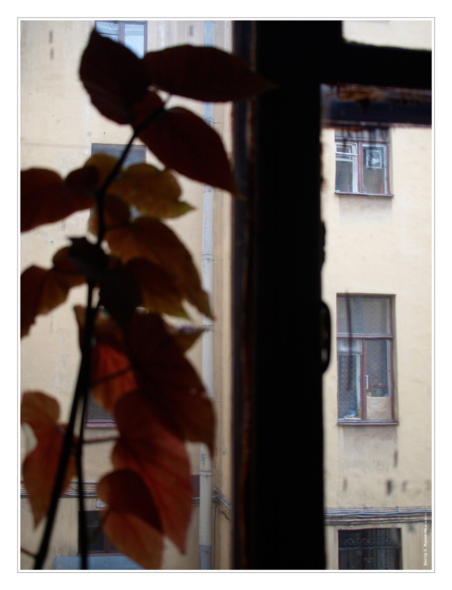 Photograph The view from the window. The yards St. Petersburg. Window across the street. by Victor K. Zhuravlev on 500px
