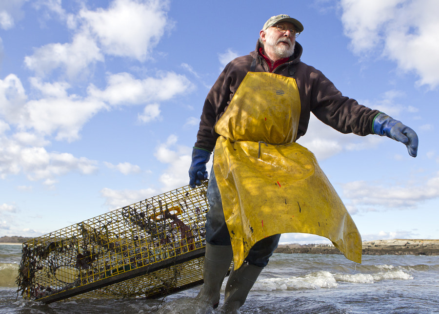 "Cape Elizabeth lobsterman Ed Perry races an incoming tide to retrieve some of his 800 lobster pots from the beach at Kettle Cove on Jan. 2. The start of the shrimp season, with its bottom-dragging fishermen, the cold weather, and the desire to ""just take a break"" for awhile prompted the temporary retreat from cold, cold sea."