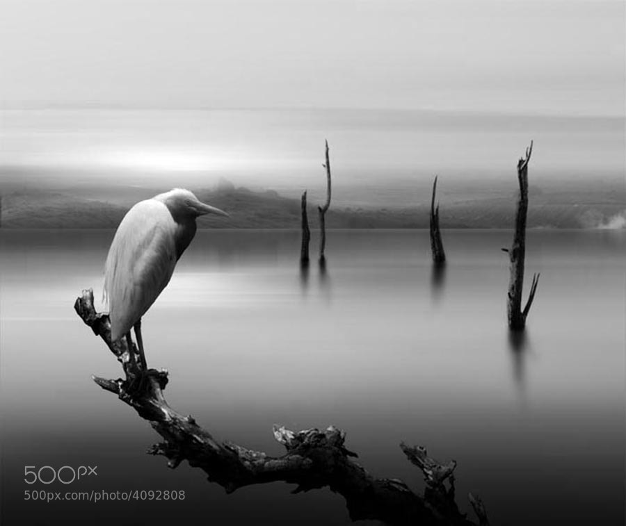 Photograph cold by budi 'ccline' on 500px