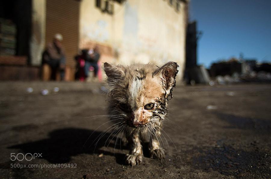 Photograph Alexandria cat by Olga  Babych on 500px