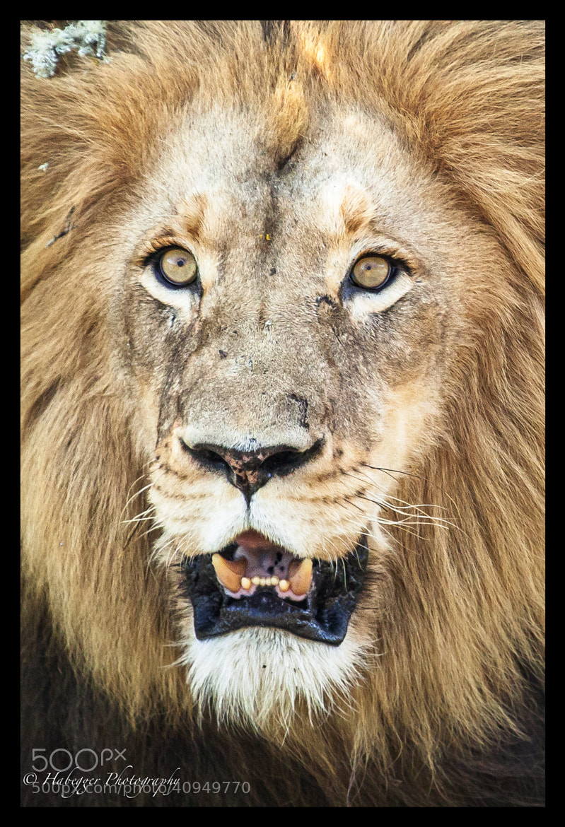 Photograph The King by Chris Habegger on 500px