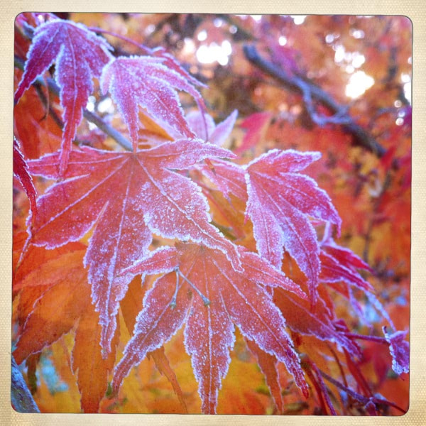 The frost only stayed around for a short while this morning. Glad I had my iPhone handy.