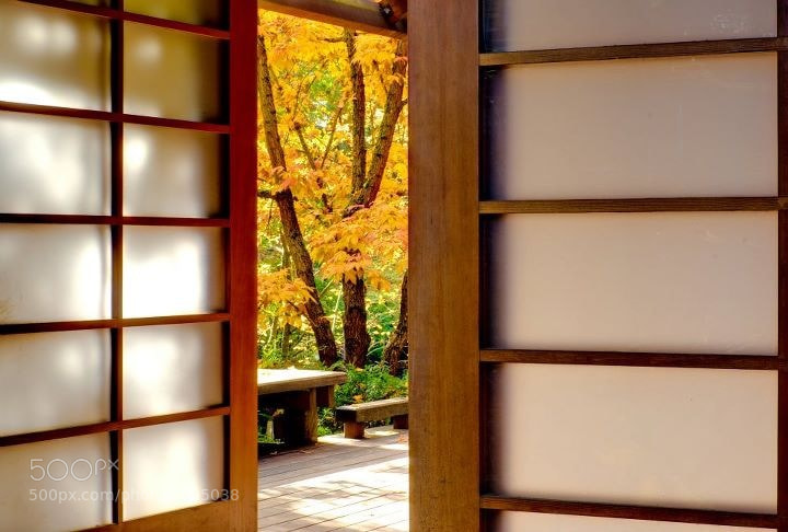 Fall color outside the Tea House at the Bellevue Botanical Gardens.
